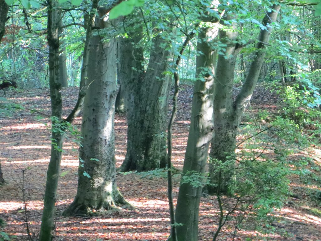 Leckhampton Woods photo