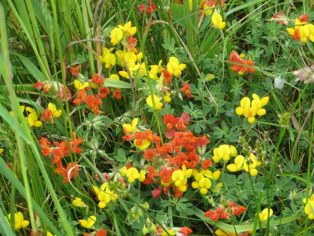 wild flowers image
